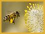 polline_homepage